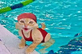 poolcat