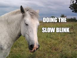 slow blink
