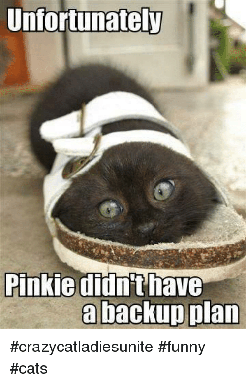 unfortunately-pinkie-didnt-have-a-backup-plan-crazycatladiesunite-funny-cats-5467388