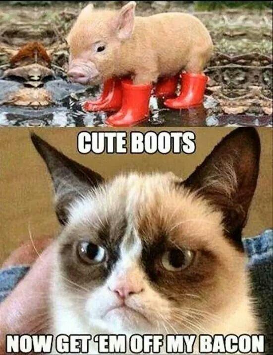 2abec96f689d7f27bc4cef1079d34be0-funny-grumpy-cat-memes-grumpy-kitty