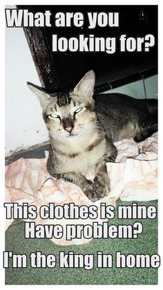433f1b7cc38a248392dd08b882d61ccf-cat-love-i-take