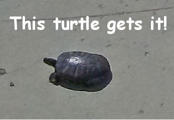 turtletext