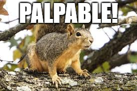 palpable squirrel.jpg