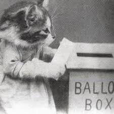 voting cat