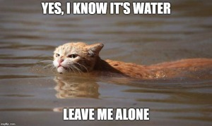 cat flood