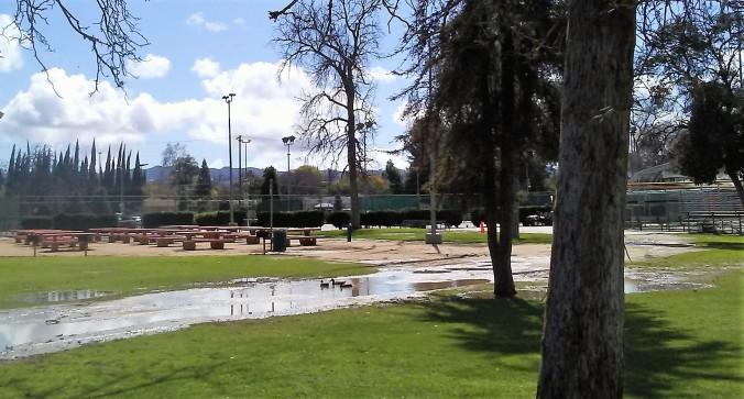 Ducks 1.jpg