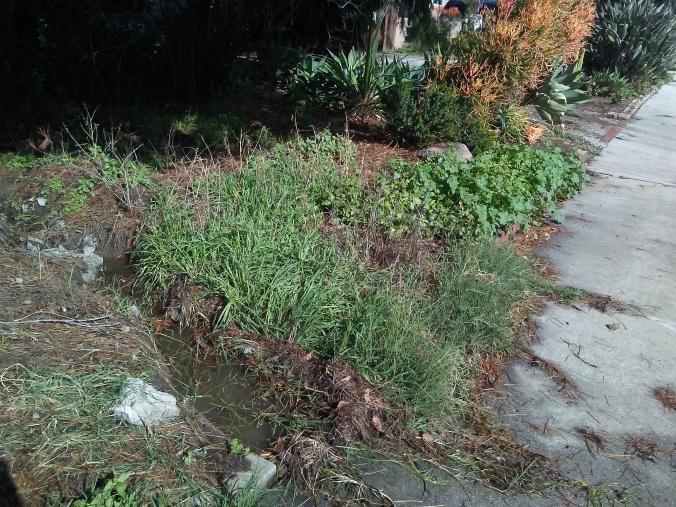 Neighborhood hidden creek 1.jpg