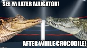 alligator crocodile