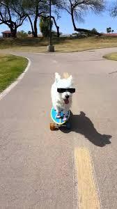 dog skateboard.jpg