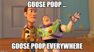 goose poop