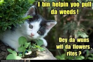 weeds cat