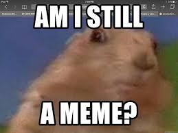 dramatic hamster.jpg