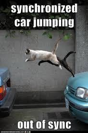 sync cats.jpg