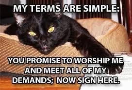cat terms.jpg