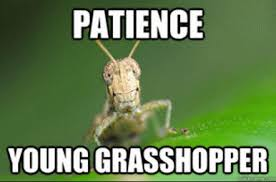 patience grasshopper.jpg