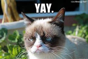 yay grumpy cat