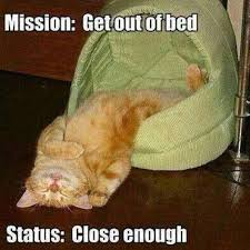 cat out of bed