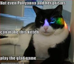 pollyanna cat