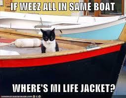 same boat cat