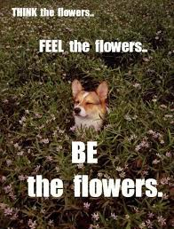 think flowers dog